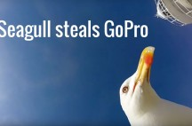 Seagull steals GoPro